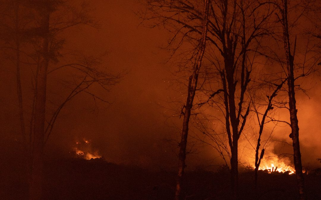 A Brief Look at Wildfires